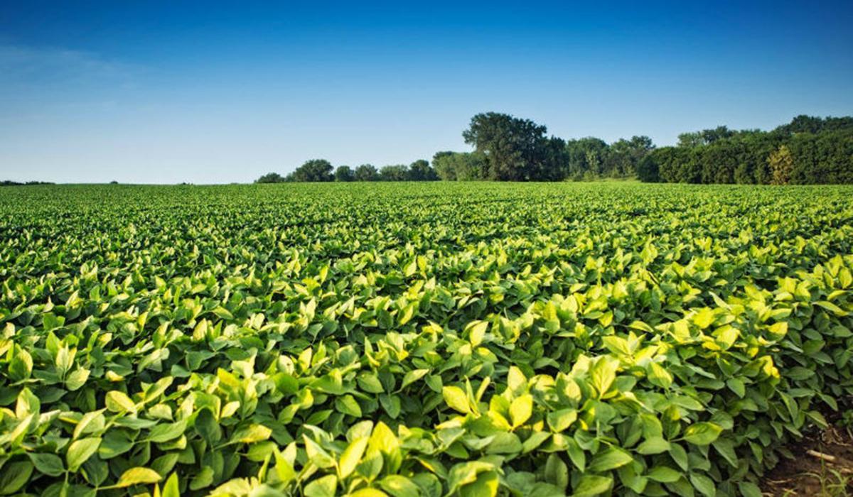 印度农业科技创企FlyBird用智能灌溉和施肥来提高农作物产量