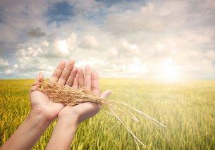 """细说""""农业众筹""""的三种创新模式"""